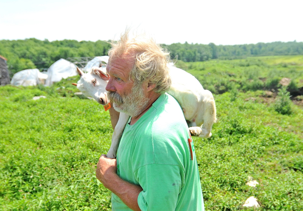 Mark Gould, 61, carries a wayward goat back to the stables at his Norman Road farm Tuesday in Sidney. Gould's goats have been escaping through a state-built fence to land beside Interstate 95.