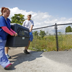 Liz Lord, left, an animal care technician with the Animal Refuge League of Greater Portland, and Bill Barthelman, right, a volunteer with Marine Mammals of Maine, carry a crate holding a baby seal away from Back Cove on Tuesday so that its health could be checked.