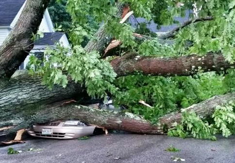 Tuesday's violent storm toppled trees in York that crushed cars and caused a widespread power outage. Rob Wright photo