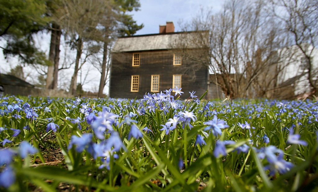 Scilla bloom in spring behind the Tate House in Portland. The gardens at the house, now a museum, were re-created using information from an architectural dig and from historical records.