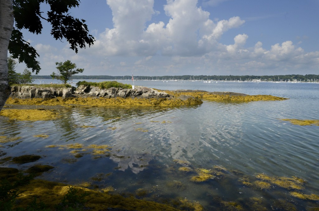 One view from Clapboard Island, where the public will soon be able to hike, picnic and go birding.