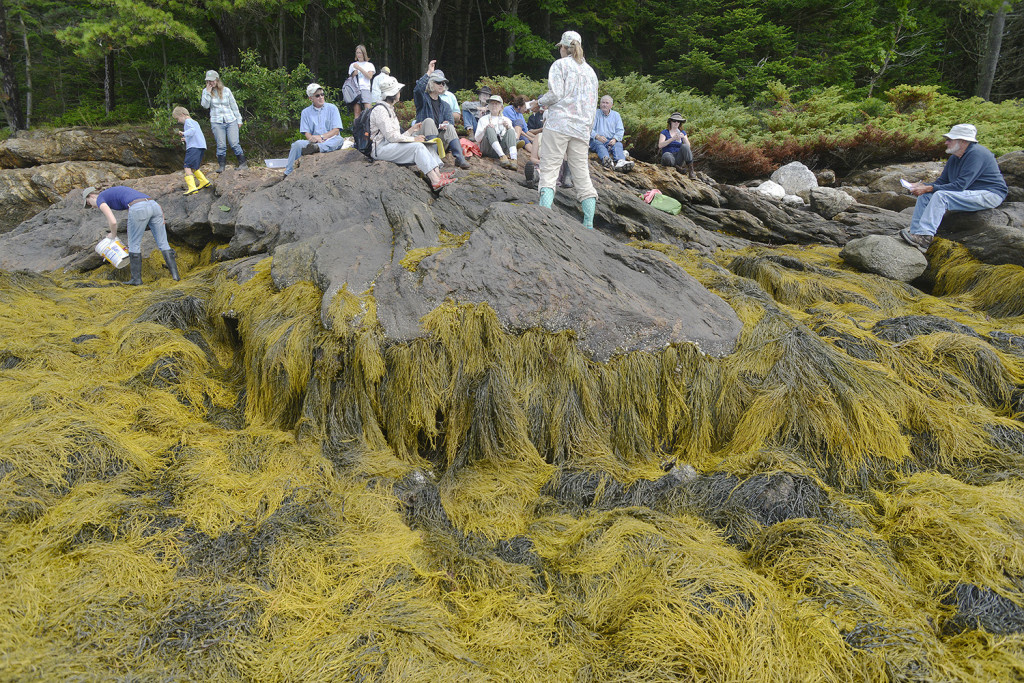 Rock weed, covering the rocks where the instruction session was held, is the area's most common variety of seaweed.