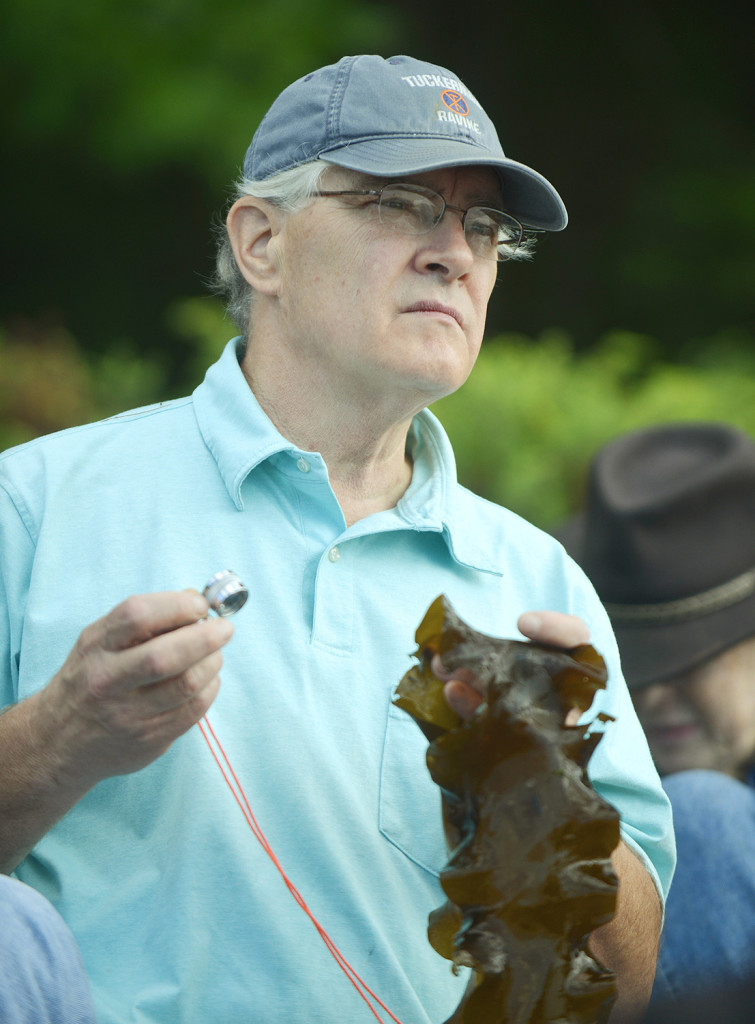 The Kennebec Estuary Land Trust introduced interested visitors to the seaweed types found on the Maine coast and uses for them.  Roland Simard, of West Bath, examined a piece of sea belt kelp during the instruction.
