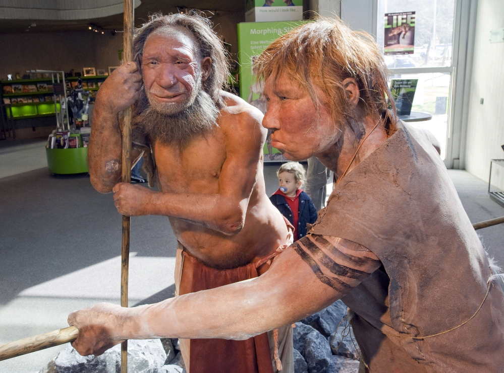 """Models of a Neanderthal man, left, and a homo neanderthalensis woman are displayed at the Neanderthal museum in Mettmann, Germany. Researchers say a """"robust"""" timeline suggests that Neanderthals and humans coexisted in Europe for about 5,000 years, allowing ample time for the two species to meet and mix."""