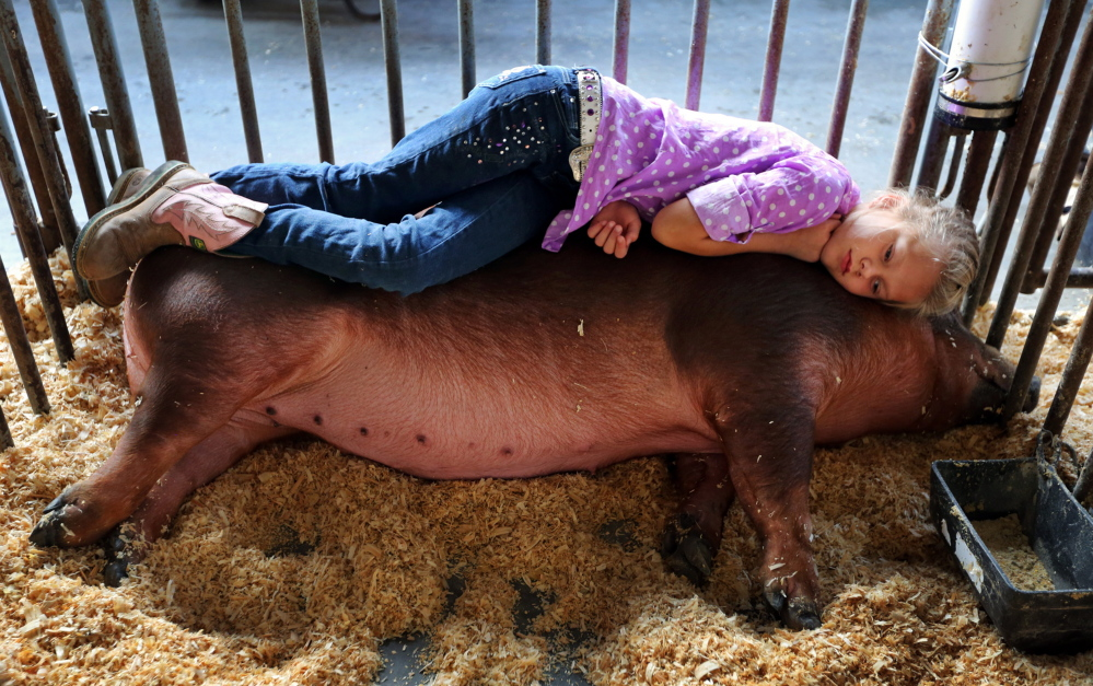 Layla Pence, 8, rests on her pig, Miss May, before showing her at the West Virginia State Fair.