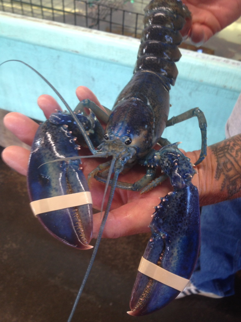 Lobsterman Tom