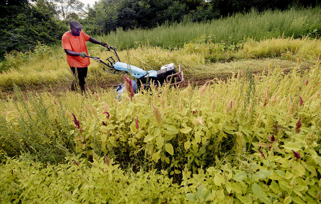 Congolese farmer Alfred Matiyabo tills land he farms in South Portland.