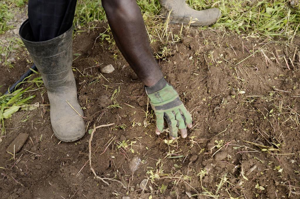 Matiyabo sifts through dirt after rototilling land in South Portland.