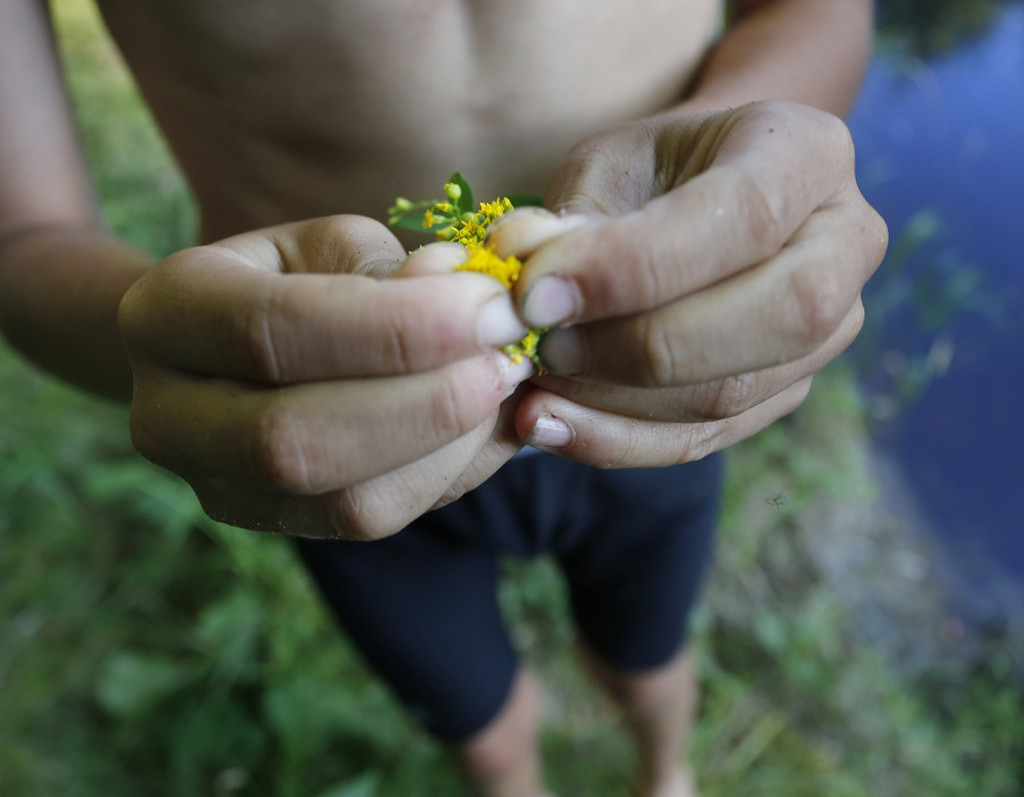 Nathan Kallin uses goldenrod to sooth his bug bites