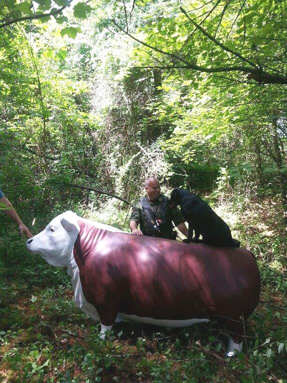 Charlie the steer accommodates a canine passenger after being located on an island in the Androscoggin River.
