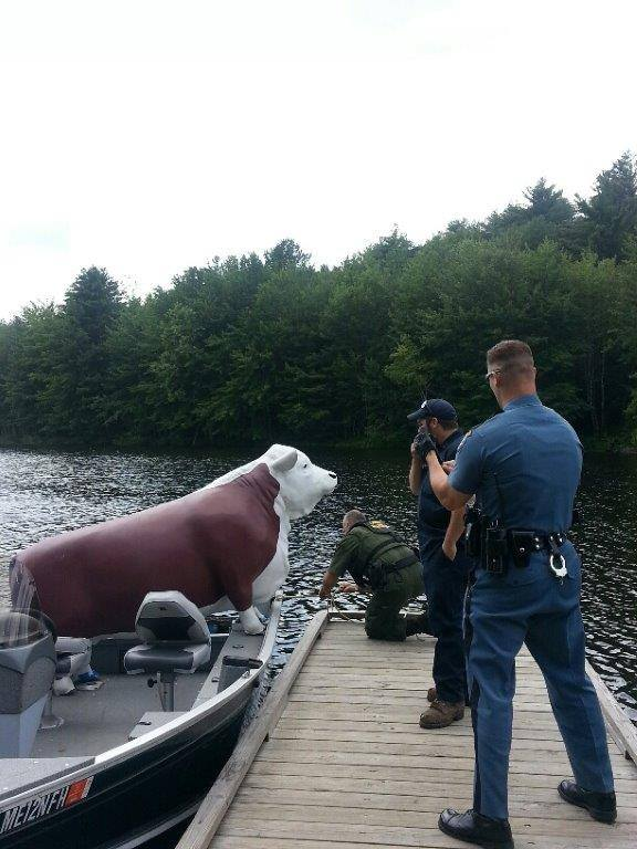Maine wardens and state police troopers effect the rescue of Charlie the steer.