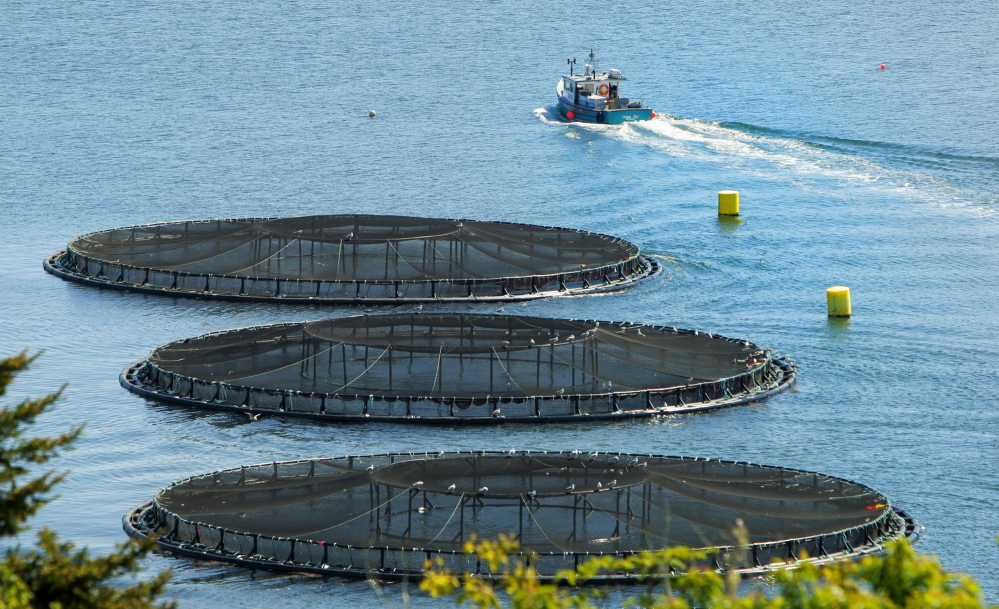 A boat pulls away from salmon pens in Friars Bay at Campobello Island in Canada. Maine's salmon farms are all located Down East.
