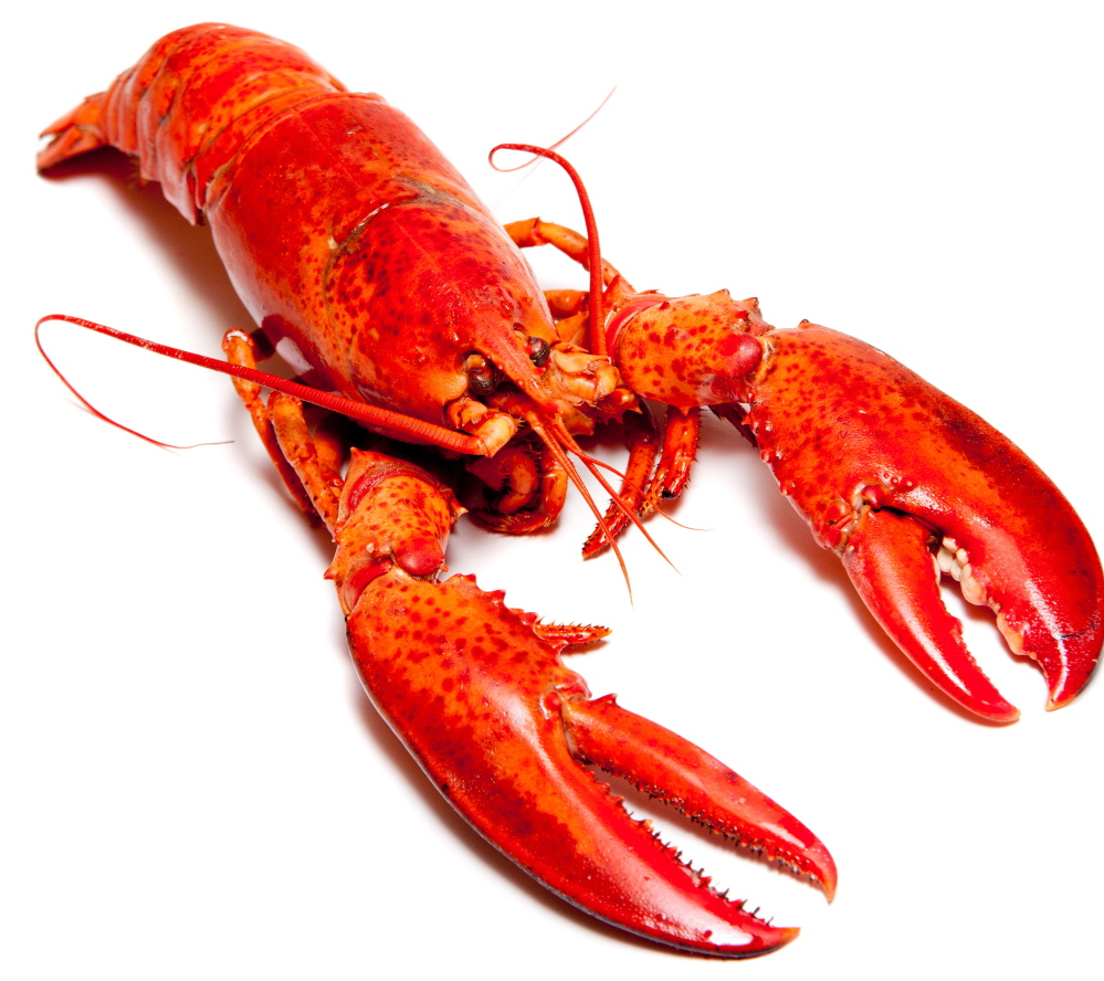 Maine lobster on the menu for Obama's dinner with Chinese president - The Portland Press Herald ...