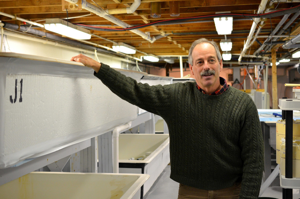 "Bill Mook stands in the hatchery operation at Mook Sea Farm in Walpole. ""When you look at the science of what we know about lobsters and how they are going to be affected by ocean acidification, we essentially are clueless,"" Mook said."