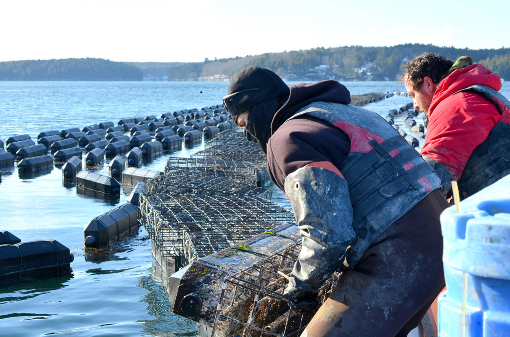 Jeff Auger and Luke Gardiner, employees of Mook Sea Farm, load bags of oysters from a hatchery into growing cages on the Damariscotta River.