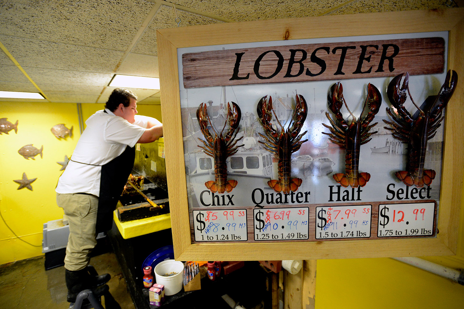 Spencer coll free range fish lobster associate the for Fishing jobs in maine