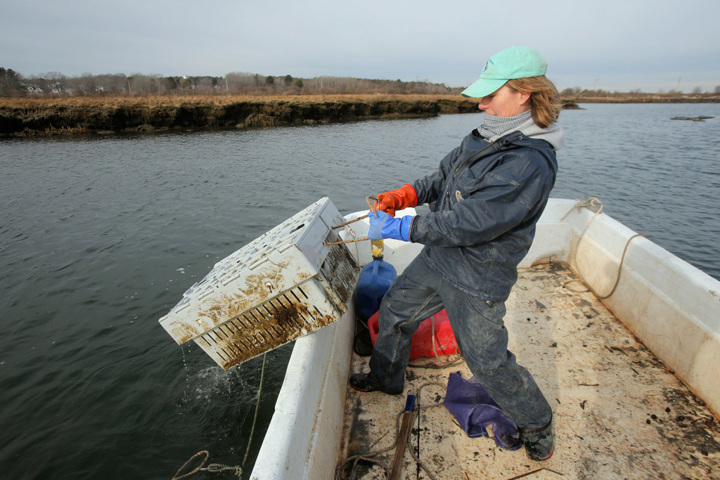 Abigail Carroll hauls a bin of oysters aboard a skiff on the Nonesuch River.
