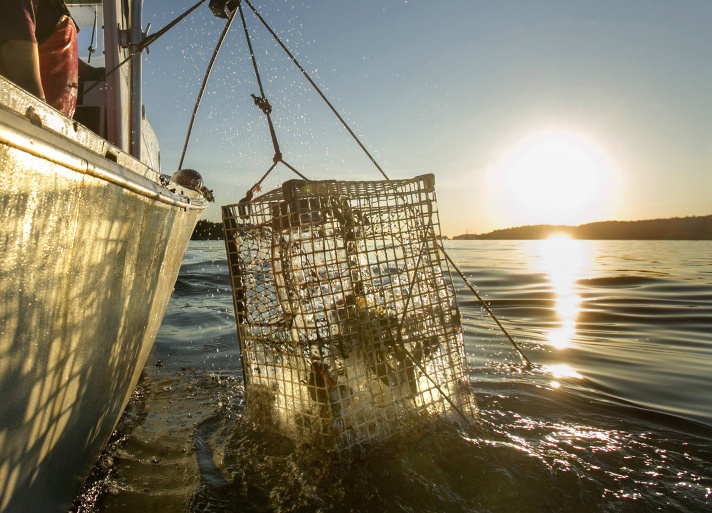 Lobstering turf war off Maine coast brings offer of $15,000 reward - The Portland Press Herald ...