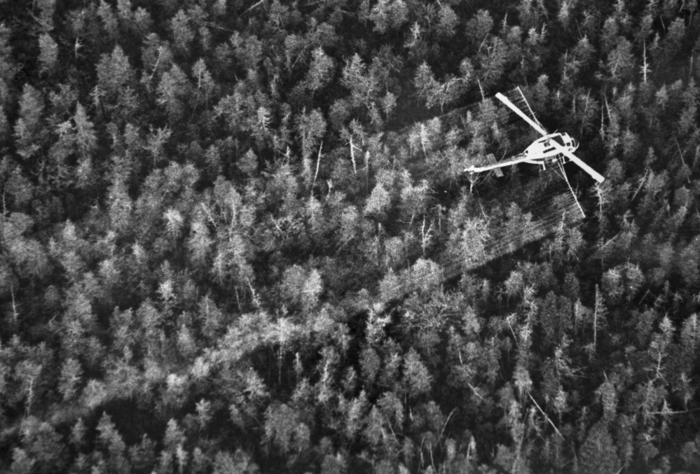 A helicopter sprays insecticide to combat spruce budworms in Long A Township in 1981. Three decades ago, the spruce budworm wreaked devastation on Maine's forests, defoliating the abundant fir and spruce trees. Entomologists say the 30-year cycle for infestations means the bugs may soon descend upon Maine again. The Associated Press