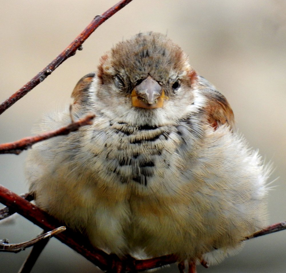 It was a first-time meeting recently between this little bird and 80-year-old Jean Wallace-Fearon of Ogunquit, who found the creature perching unafraid on a limb by the Marginal Way.