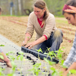 Jan Goranson, center, Dalziel Lewis, left, and Camilla Jones transplant seedlings at Goranson Farm in Dresden in 2014. Farming in Maine took off from 2002 to 2012, but farmers' balance sheets haven't reflected it.
