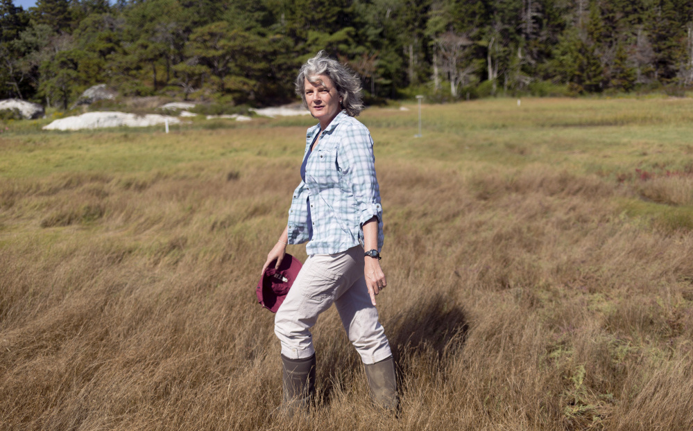 Bates College professor Bev Johnson and her students conduct climate change research in Sprague Marsh at the Bates-Morse Mountain Conservation area in Phippsburg. Brianna Soukup/Staff Photographer