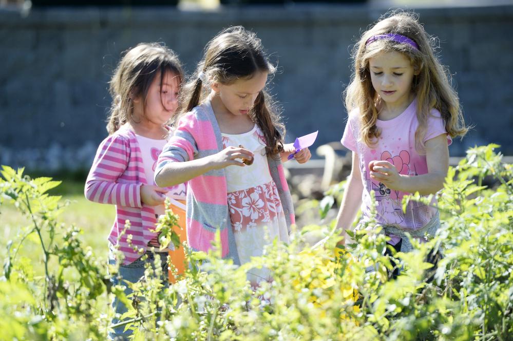 Kindergartner Serenity Mitchell, second-grader Josie Christensen and second-grader Macie Helms pick tomatoes in their school garden. Shawn Patrick Ouellette/Staff Photographer