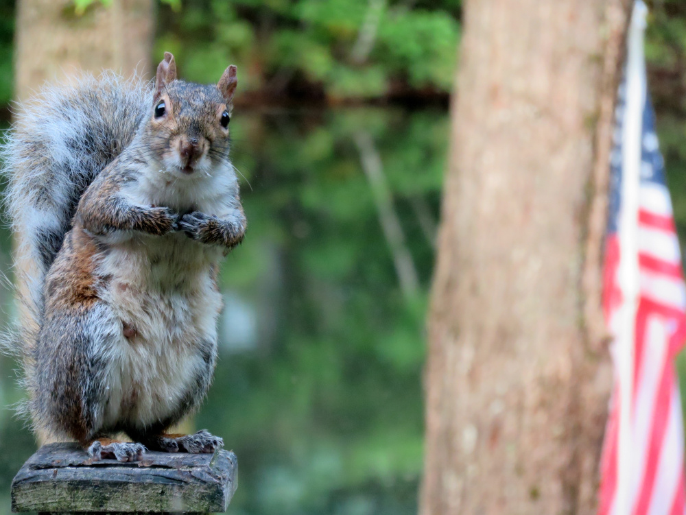 Cathy Wilkie Conley doesn't usually need a reminder to feed the birds in her Alfred yard, but this critter served as something of a wakeup call before she could even consume her first cup of coffee on a recent morning. And the feed isn't even meant for him!