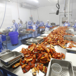 Workers process cooked Maine lobster claws in 2014 at Cape Seafood in Saco, owned by Cape Elizabeth native Luke Holden. His Luke's Lobster business has capitalized on the area's labor advantages and the popular Maine brand.