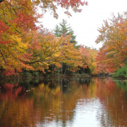 In autumn, escapades via canoe are rewarded with a cascade of colors, such as this brilliant foliage along the Sheepscot River just north of Sheepscot Pond in Palermo.