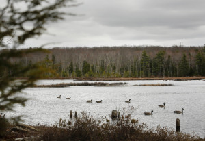The Knight's Pond Preserve in Cumberland and North Yarmouth, seen in April, has been open for the last year. Plans are in the works for more trails and a parking lot at the property.