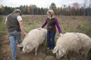 Steve Sinisi and his wife, Seren, check two Mangalitsa pigs at their Old Crow Ranch in Durham. They usually put up about 255 bales of hay to feed their cattle through the winter, but the drought has reduced the hay this year to 170 bales, so they're applying for federal aid.