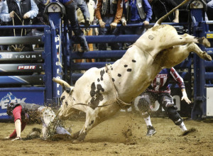 Dakota Buttar scrambles away from a bull called Hicktown after dismounting from a ride that garnered him first place, netting him $800.  Gregory Rec/Staff Photographer
