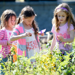 WEST BROOK, ME - OCTOBER, 5: L to R, kindergartner Serenity Mitchell, second grader Josie Christensen and second grader Macie Helms pick tomatoes in the Garden at Saccarappa School in Westbrook  Wednesday, October 5, 2016. (Photo by Shawn Patrick Ouellette/Staff Photographer)