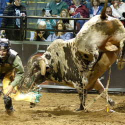 Jordan Hupp gets away from a bull named Spotted Juice after being thrown off by the bull.