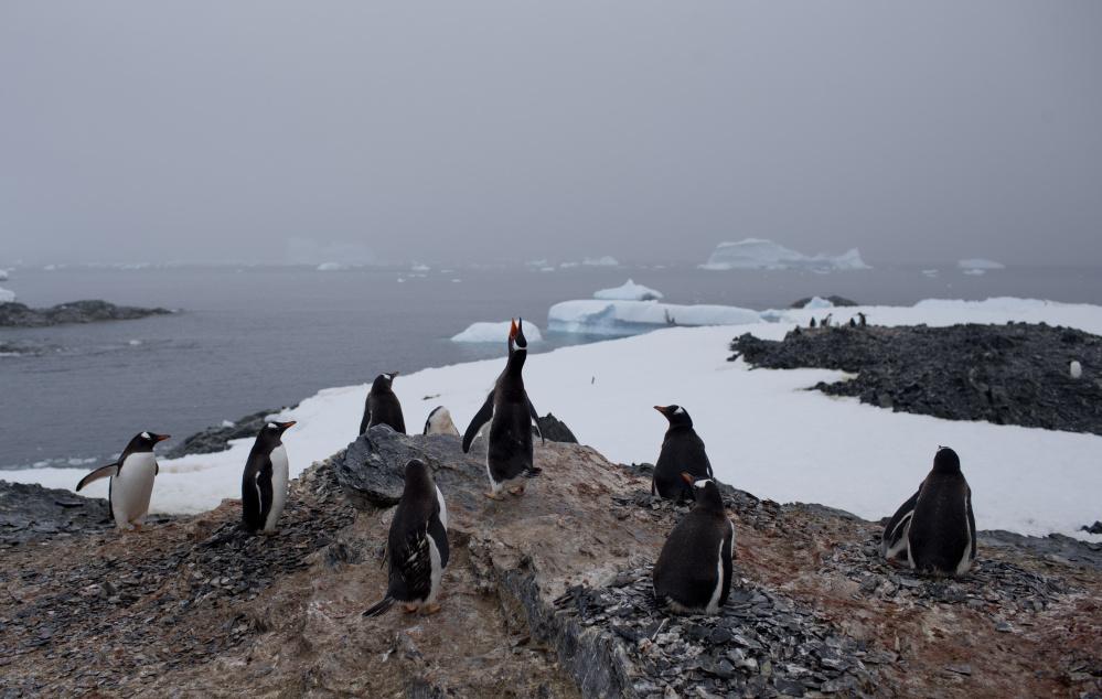 Thinning of Antarctic glacier began in 1940s